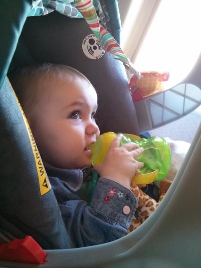Good little traveler!