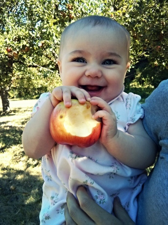 Loving apples from the orchard!
