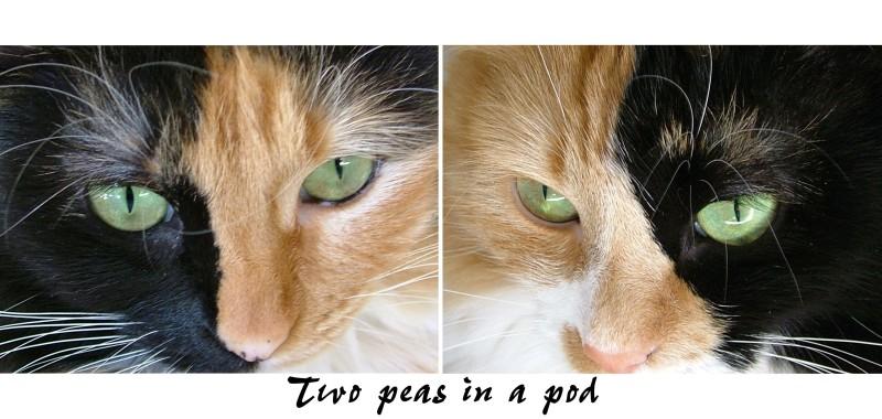 kittyfaces1